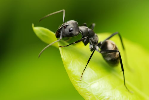 Get Rid of Ants Quickly With These Common Household Remedies