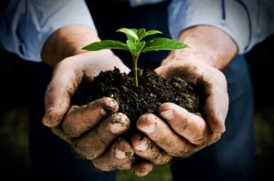 Ask the Experts: Replanting Trees and Seeding New Grass for Landscaping