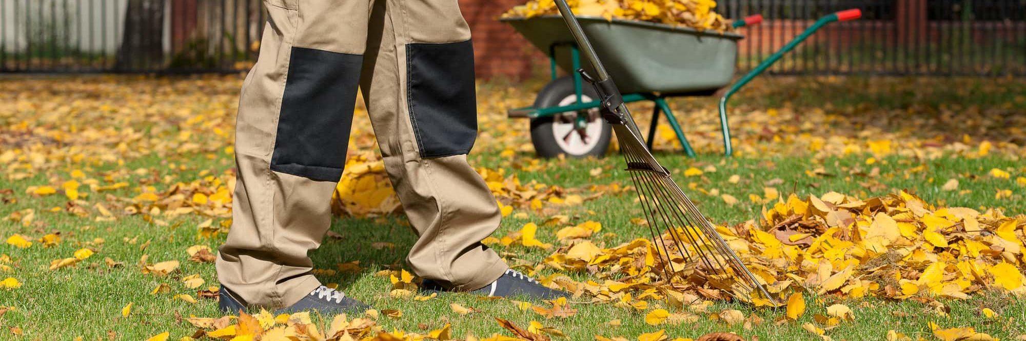 Person raking leafs